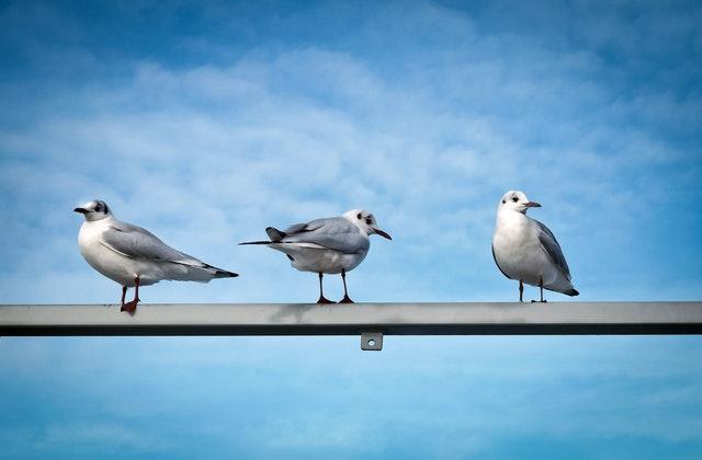vtáky sediace na zábradlí.jpg