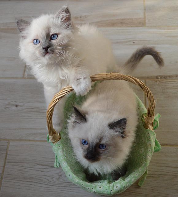 dve mačky s košíkom.jpg